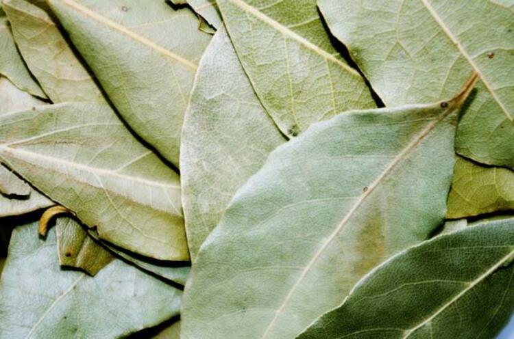 cüzdana defne yaprağı koyma